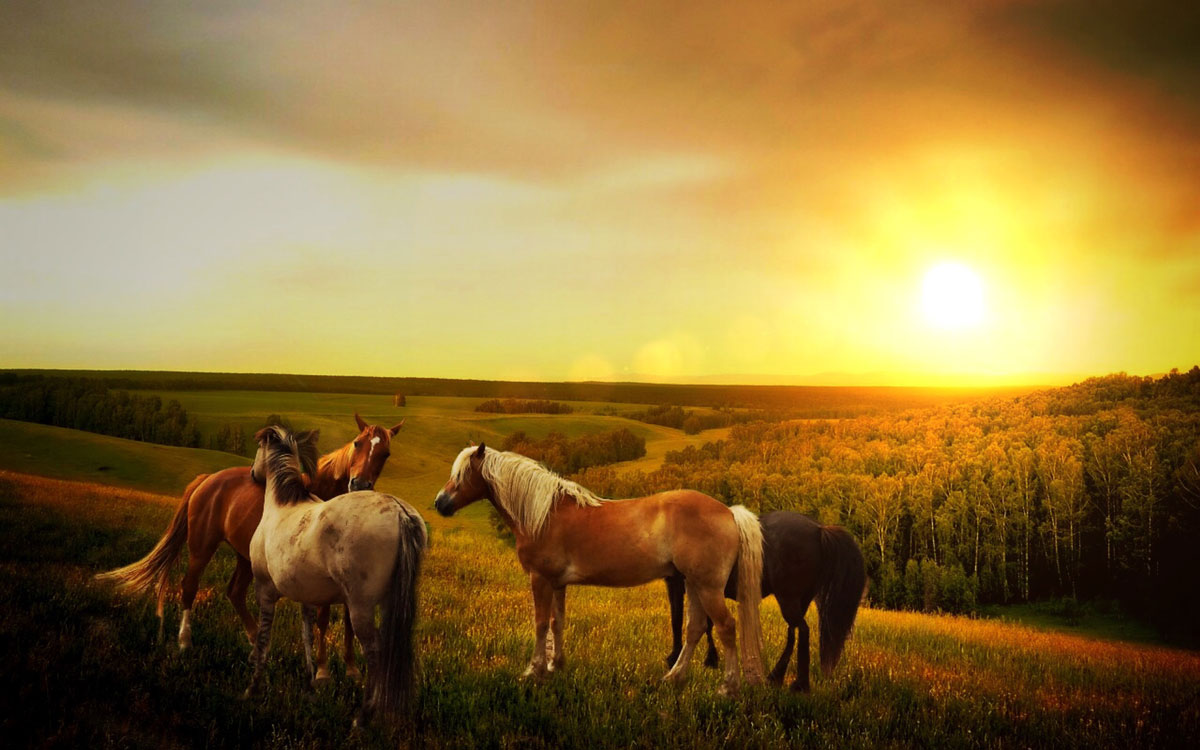 The Control of Horses Act 2015 (CHA 2015)