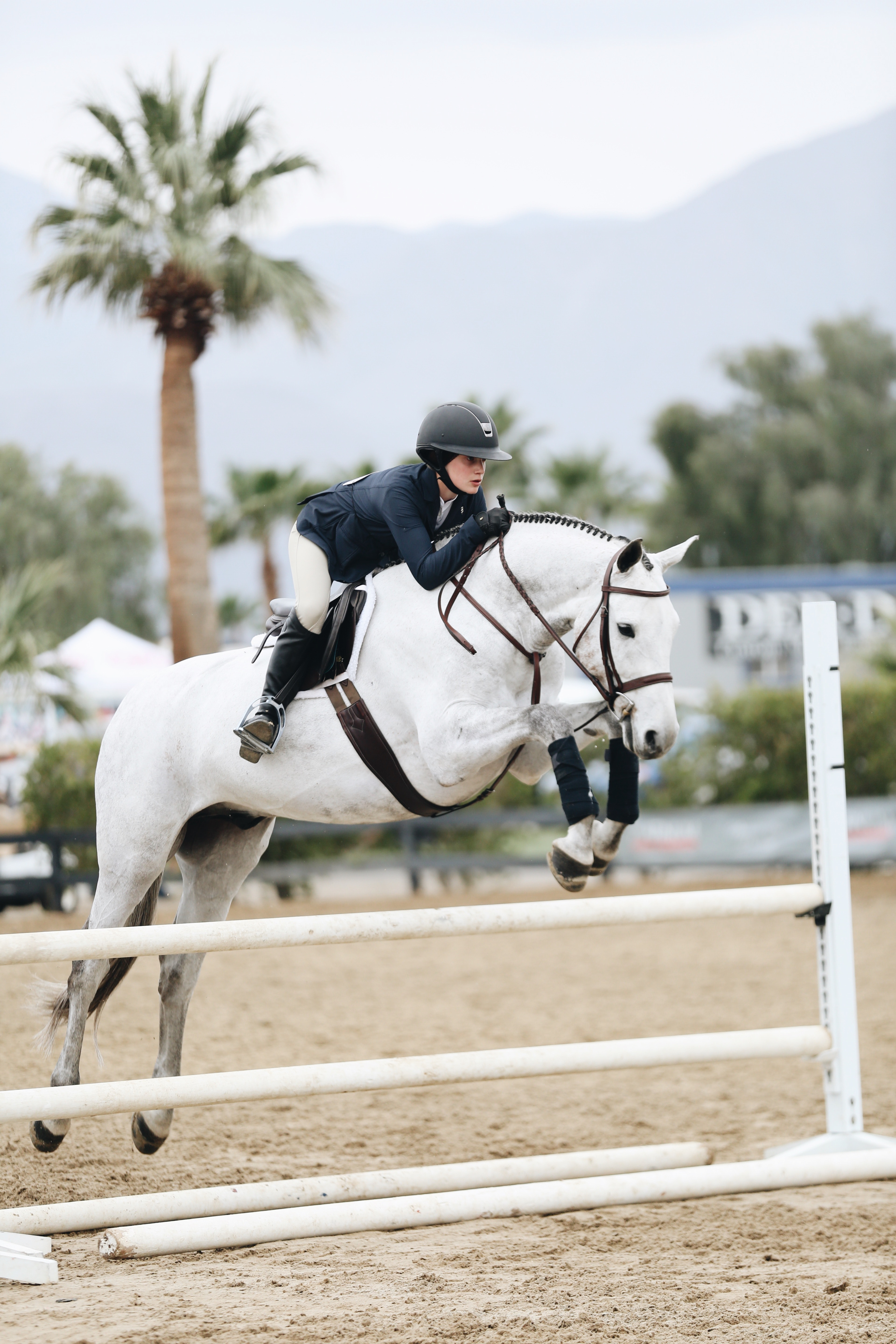 Buyer Loses Case Because Of Not Trying Expensive Jumping Horse Herself Before Purchase European Us Asian Equine Lawyers Euael